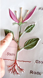 A person's hand is feeling a scientific image of a flower. This tactile image is a colorful illustration that has been thermoformed with Braille and raised-line pictures.